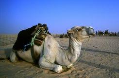 Tunesien lizenzfreie stockbilder