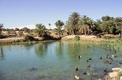 Tunesische oase stock fotografie