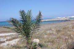 Tunezja Obrazy Royalty Free