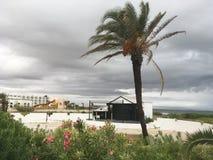 Tunezyjski drzewko palmowe na tła niebieskim niebie Zdjęcie Royalty Free