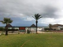 Tunezyjski drzewko palmowe na tła niebieskim niebie Zdjęcia Stock