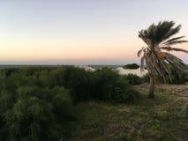 Tunezyjski drzewko palmowe na tła niebieskim niebie Obrazy Royalty Free