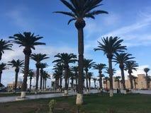 Tunezyjski drzewko palmowe na tła niebieskim niebie Zdjęcia Royalty Free