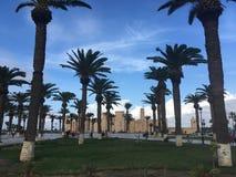 Tunezyjski drzewko palmowe na tła niebieskim niebie Obraz Royalty Free