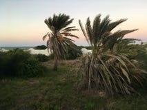 Tunezyjski drzewko palmowe na tła niebieskim niebie Obrazy Stock