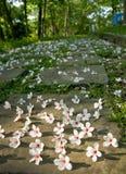 Tung άνθος στο έδαφος Στοκ Φωτογραφίες