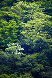 Tung blomma i skogen arkivbilder