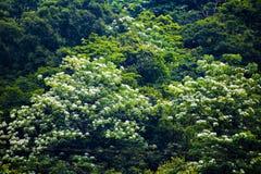 Tung blomma i skogen arkivfoto