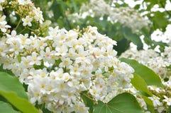Tung blomningbakgrund Arkivfoton