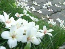 Tung Blossom Festivals Stock Photo