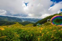 Tung Bua Tong Mexican-zonnebloem onder blauwe hemel Stock Foto's