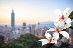 Tung flower Blossom dring the spring season with nice color Stock Images