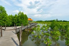 Tung Prong λουρί ή χρυσός τομέας μαγγροβίων στην εκβολή Pra Sae, Rayong, Ταϊλάνδη στοκ εικόνες