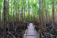 Tung Prong Thong or Golden Mangrove Field at Estuary Pra Sae, Rayong, Thailand. Tung Prong Thong or Golden Mangrove Field. Natural place food learning about royalty free stock photography