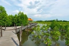 Tung Prong Thong o campo de oro del mangle en el estuario Pra Sae, Rayong, Tailandia imagenes de archivo