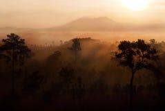 Tung Salang Luang, Sawanna en Tailandia Imagen de archivo libre de regalías