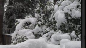 Tung snö från storm faller ner på träd och buskar i Washington arkivfilmer