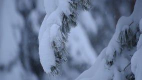 Tung snö sörjer filialer arkivfilmer