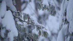 Tung snö sörjer filialer stock video