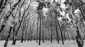 Tung snö som faller i en skog i vintertid arkivfilmer