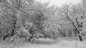 Tung snö som faller i en skog i vintertid lager videofilmer