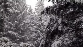 Tung snö som faller på träd i trä av västra washington stock video