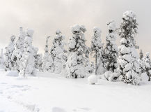 tung snow Arkivfoto