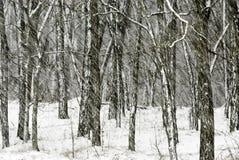 tung snowing Arkivbild