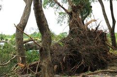 Tung storm för trädkollaps tack vare Royaltyfria Bilder