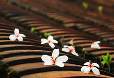 Tung tree flowers. Over the roof Royalty Free Stock Image