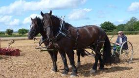 Tunga hästar på en landsshow i England Royaltyfri Foto