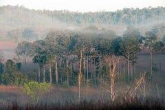 Tungsalanglung National Park in Thailand . Stock Photos