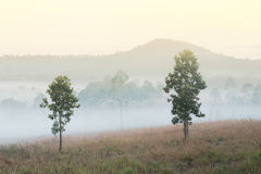 Tungsalanglung National Park in Thailand . Stock Image