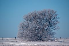 Tungt glaserade träd mot en Robin Egg Blue Sky Royaltyfria Foton