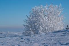 Tungt glaserade träd mot en Robin Egg Blue Sky Fotografering för Bildbyråer