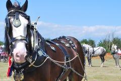 Tungt hästanseende i fält arkivbild