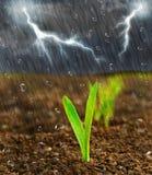 tungt regn Arkivfoton