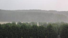 tungt regn Skyfallet över skog och parkerar landskap royaltyfri fotografi