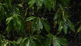 Tungt regna på det gröna bladet fotografering för bildbyråer