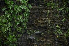 Tungt regna på det gröna bladet arkivbild