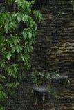Tungt regna på det gröna bladet royaltyfria foton
