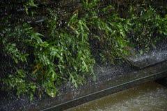 Tungt regna på det gröna bladet royaltyfri bild