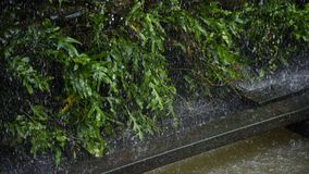 Tungt regna på det gröna bladet arkivfoto