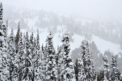 tungt sörja snowtrees Fotografering för Bildbyråer