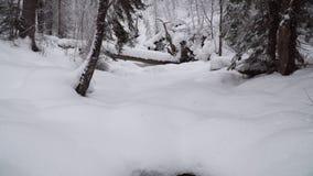 Tungt snöfall i en vinterskog stock video