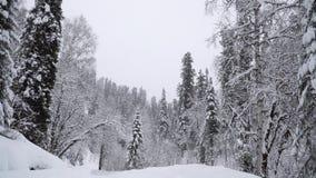 Tungt snöfall i en vinterskog arkivfilmer