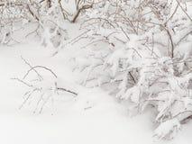 Tungt snöfall i skogen fotografering för bildbyråer