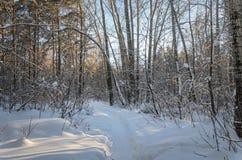 Tungt snöfall i staden arkivfoton
