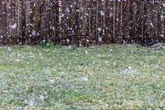 Tungt snöfall, sikt av stora snöflingor som faller på en trädgårdgräsmatta arkivfoton