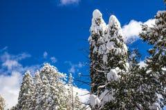 Tungt snöfall som täcker Forest Trees royaltyfria bilder